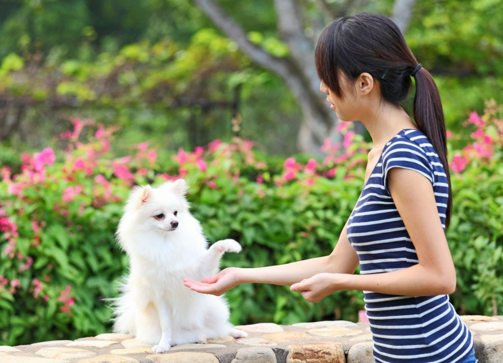 Trainer feeding dog for raising its paw - positive reinforcement